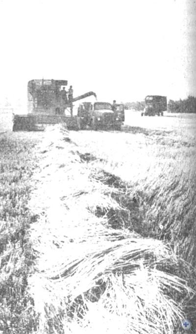 Уборка урожая в колхозе «Дружба». Поселок Удачное, 1974 г.