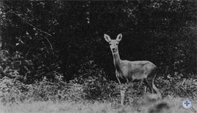 В Карпатах. 1977 г.