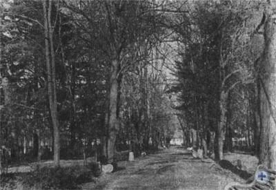 Великоберезнянский парк, заложенный в XIX в. Фото 1980 г.